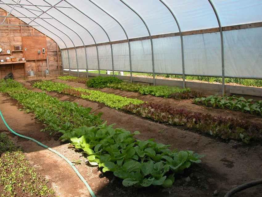 greenhouse-website-size_orig